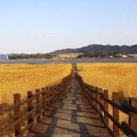|충청|11/30 출발확정_서천가을갈대여행+황금빛 장관 신성리갈대숲+모시쿠키만들기+성주산자연휴양림