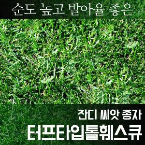 터프타입톨훼스큐 _씨앗_한지형 잔디 1kg