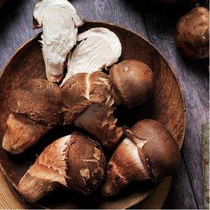 박성식생산자 향이깊은 나주 참송이버섯 1kg (정품)
