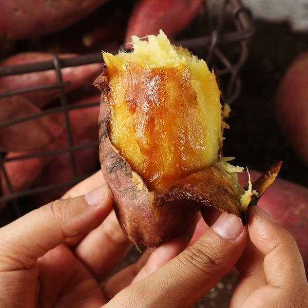 박윤종 농부의 무농약 토담 꿀고구마 5kg