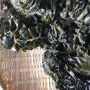 미역귀 500g 완도 금일해역의 깨끗하고 짜지않은 제품