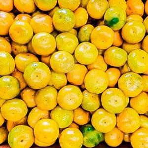 제주 달콤 노지감귤 10kg 한입소과(1000박스 한정)