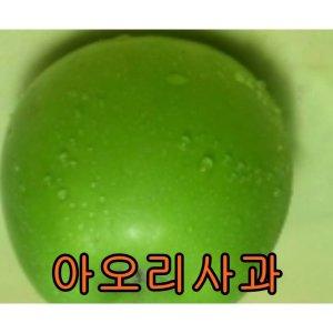 사과나무아오리접1년생/묘목/남천/나무/벌나무/살구