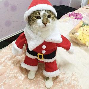 산타클로스 강아지 고양이 반려동물 옷 모자 의류