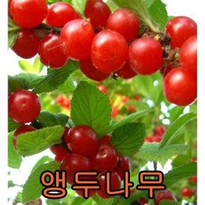 나무야 앵두나무키1.2M분/철쭉/울타리/포도/비파/배