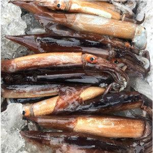 국내산 햇오징어 1kg+1kg 外 갑오징어갯가재거북손 등 /옵션 2개 구매시 홍합1kg/ 얌테이블