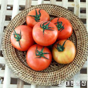 대한농산 스테비아 토마토 토망고 1kg내외/단마토