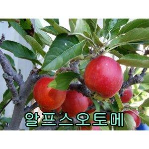 나무야 알프스오토메3년분/철쭉/유실수/포도/비파/밤