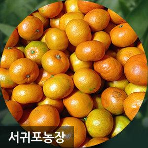 귤 15KG 10KG 조생귤 서귀포농장 무료반품가능