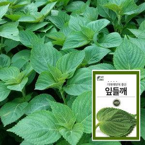 마이플랜트 잎들깨 채소 씨앗 베란다 텃밭 가꾸기