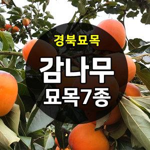 감나무 묘목 판매중(대봉/단감/야오끼/둥시/태추단감)