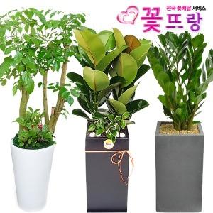 공기정화식물 개업화분/집들이/스투키/행운목/금전수