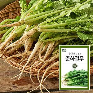 마이플랜트 춘하열무 채소 과일 씨앗 베란다 텃밭