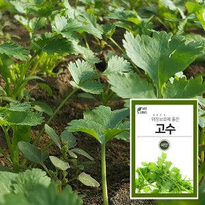 마이플랜트 고수 채소 씨앗 베란다 텃밭 가꾸기