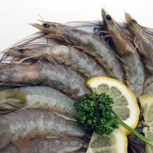 냉동 흰다리 화이트 새우 20미 500g 감바스 새우튀김