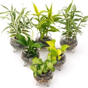 천연가습기 공기정화식물 수경식물 투명화병 6종