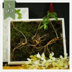산양산삼 장뇌산삼 야생산삼 고급 명품 외국인 선물
