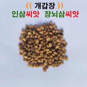 개갑장(인삼씨앗 장뇌삼씨앗)개갑씨앗 100g(2500립)