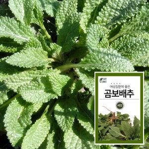 마이플랜트 곰보배추 채소 씨앗 베란다 텃밭 가꾸기