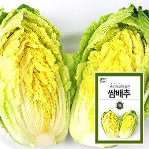 마이플랜트 비타민 쌈배추 채소 씨앗 베란다 텃밭