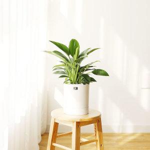 스파티필럼 모던 세라믹화분 블랙 중형 공기정화식물