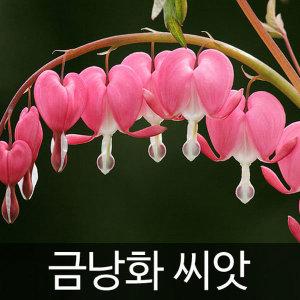 금낭화씨앗 금낭화 씨앗 ( bleeding heart seed 20알