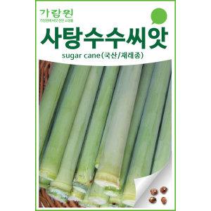 사탕수수씨앗 사탕수수 씨앗 단수수씨앗 40알 이상