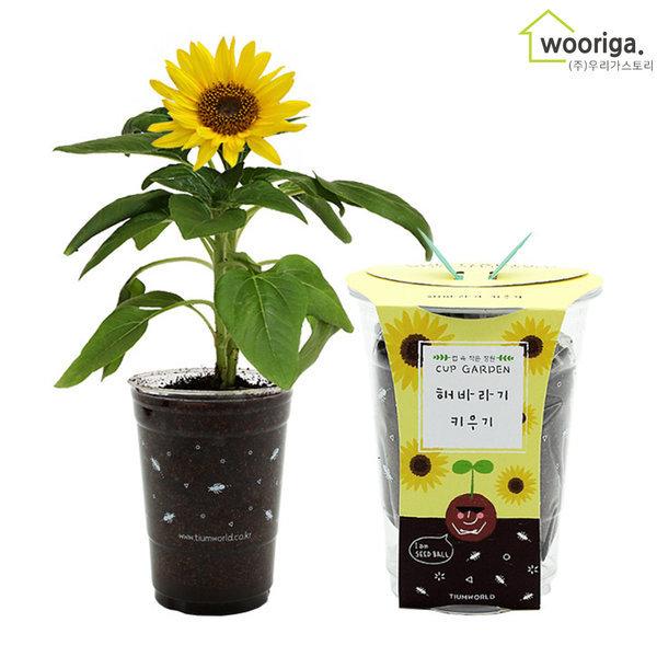 미니 해바라기 꽃 화분 공기정화식물 새싹 화분키우기