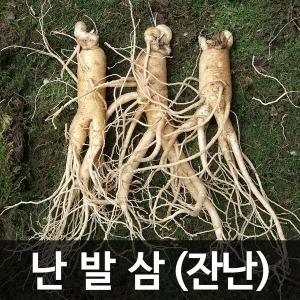 금산인삼 수삼(난발삼) 잔난 (750g) (20~25뿌리)