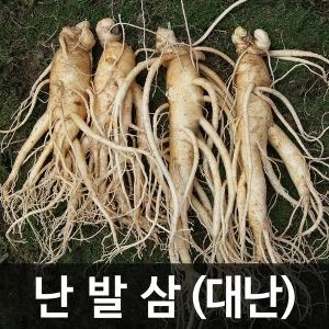 금산인삼 수삼(난발삼) 대난 (750g) (9~12뿌리)