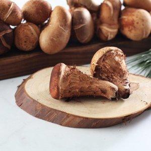 (향채움)  향채움  국내산 참송이버섯 1kg