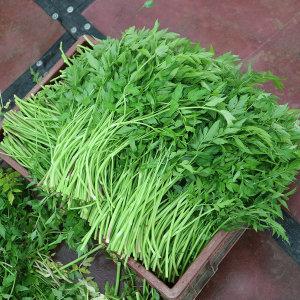 유기농 밭 미나리 1kg 산지직송 거머리 없는 미나리