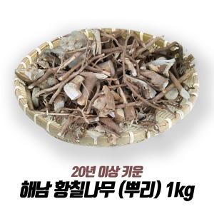 해남 황칠나무 (뿌리) 1kg /20년 이상재배/최상품
