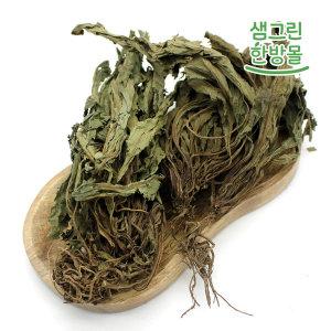 곰보배추 300g 국내산 설견초 배암차즈기