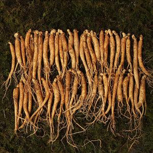 인삼 짠삼계 80뿌리이상 500g 국내산 삼계용 수삼100%