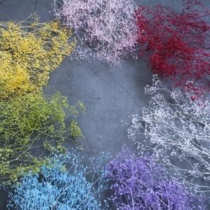 프리저브드 구슬 미니안개꽃 소량/하바리움 보존화