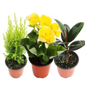 1+1 공기정화식물/구매수량별사은품/꽃/허브/다육