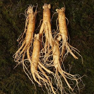 인삼 직삼 대편 8~10뿌리내외 500g 국내산 수삼 100%