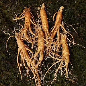 인삼 직삼 중편 9~12뿌리내외 500g 국내산 수삼 100%