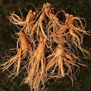 인삼 난발삼 대편 8~11뿌리내외 500g 국내산 수삼
