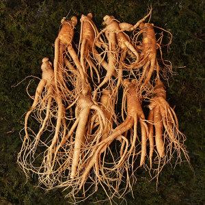 인삼 난발삼 중편 10~13뿌리내외 500g 국내산 수삼