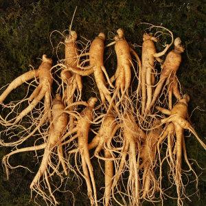 인삼 잔난발삼 22뿌리내외 500g 국내산 수삼