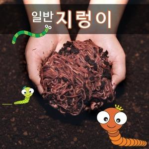 지렁이/지렁이농장거래/학습용지렁이/실습용