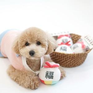 패리스독 설맞이 복주머니 토이 강아지 삑삑이 장난감