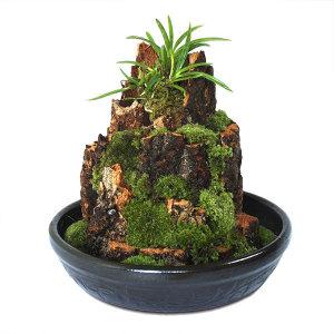 나무껍질 옹기분재 (대) 미니정원/자연가습