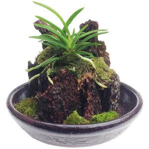 나무껍질 옹기분재 소 숯분재/새집증후군제거/자연가습