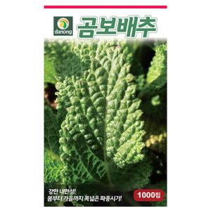 곰보배추 씨앗 1000립 채소 종자