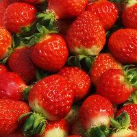 이주복딸기 쥬스용2kg/설향딸기/당일수확/무료배송