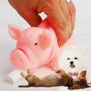 애견스트레스 해소 장난감 삑삑이 돼지 소리 분리불안