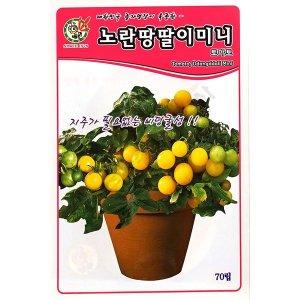 노랑땅딸이/토마토씨앗 노랑땅딸이 토마토씨앗 70립